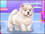 Chow Chow Spa Salon