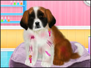 St Bernard Puppy Day Care